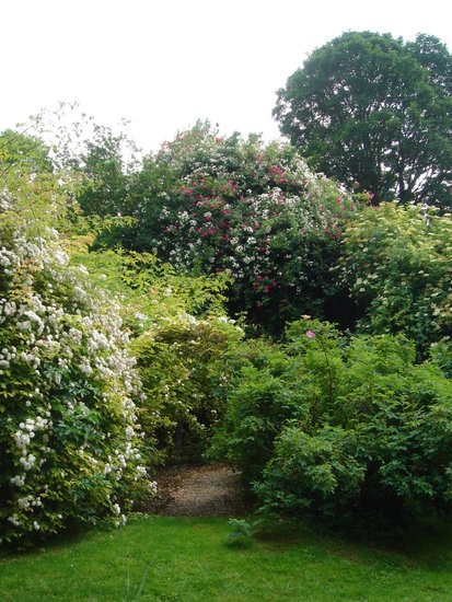 'Lime Kiln Rose Garden'  photo