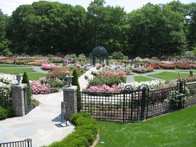 'The Peggy Rockefeller Rose Garden'  photo