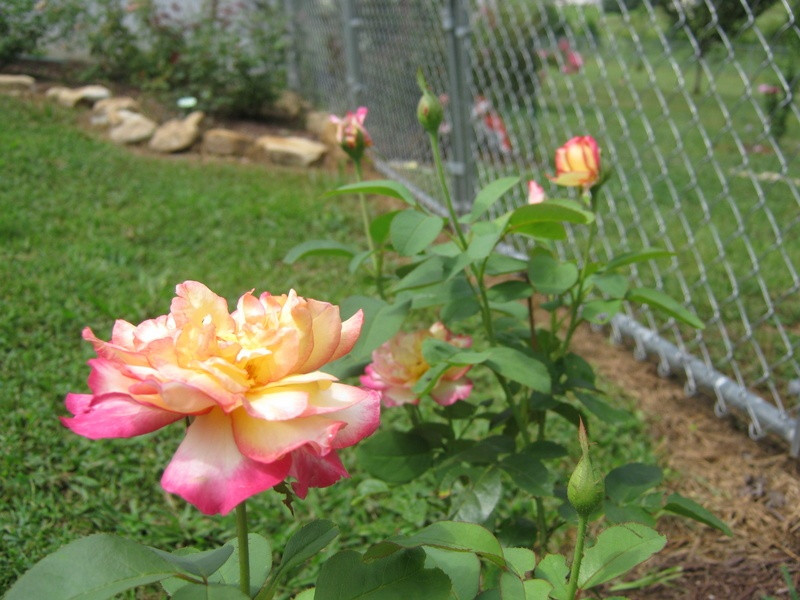 'Tammy's Tennessee Garden'  photo