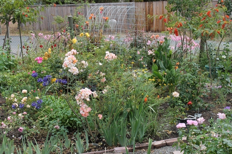 'Landperson's Garden'  photo