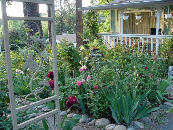 'Beth's Northern CA Rose Garden'  photo
