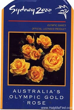 'Olympic Gold (grandiflora, Carruth 1997)' rose photo