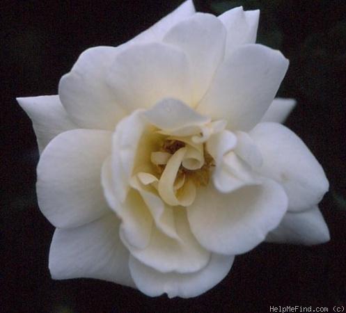 Bouquet Tout Fait