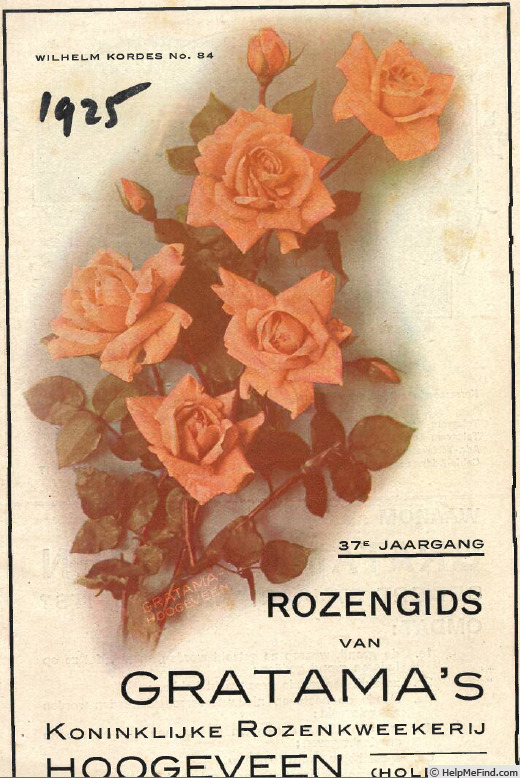 'Wilhelm Kordes (pernetiana, Kordes, 1922)' rose photo