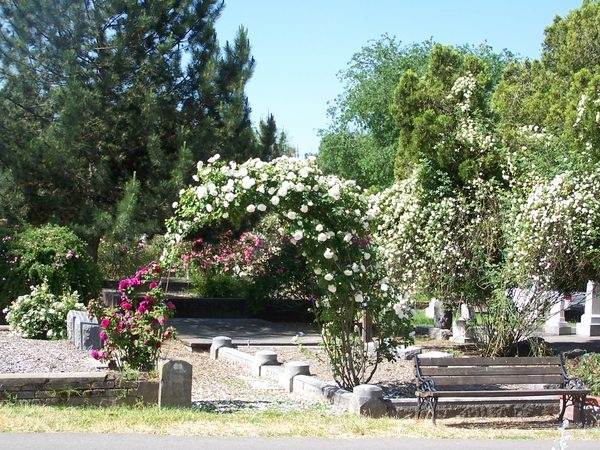 'Sacramento Historic Rose Garden'  photo