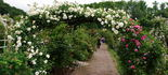 Cranford Rose Garden garden photo
