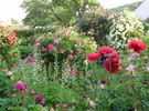 Andreas'Garten garden photo