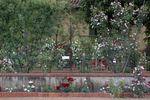 Carla Fineschi Foundation Rose Garden garden photo