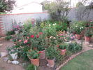 Dave's Arizona Garden garden photo