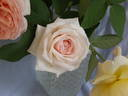 Pink Chiffon rose photo
