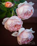 Ambridge Rose ® rose photo